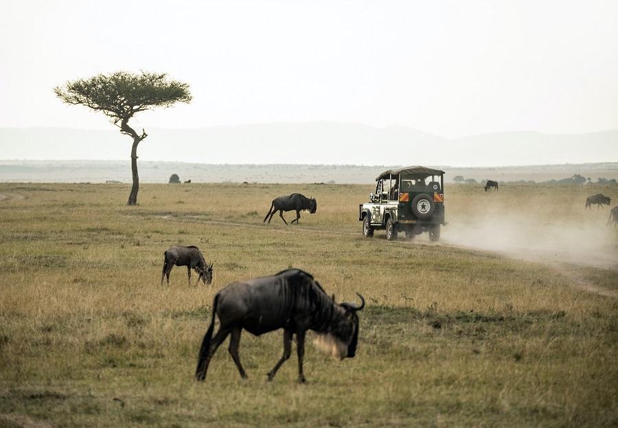 safari drive serengeti